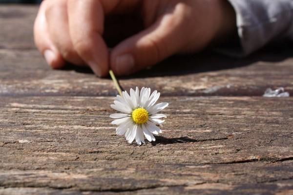 daisy-75190_960_720