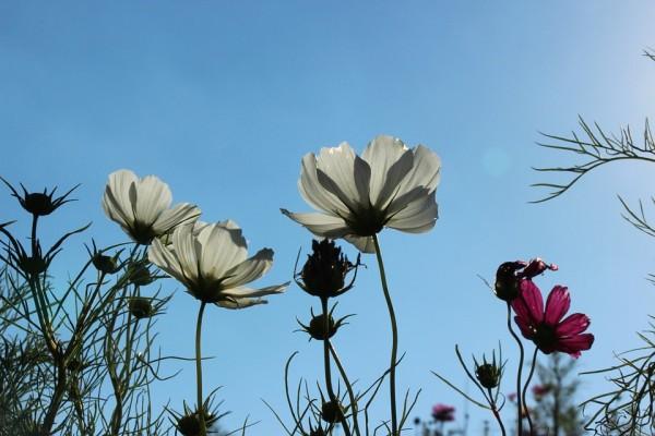 flowers-610005_960_720
