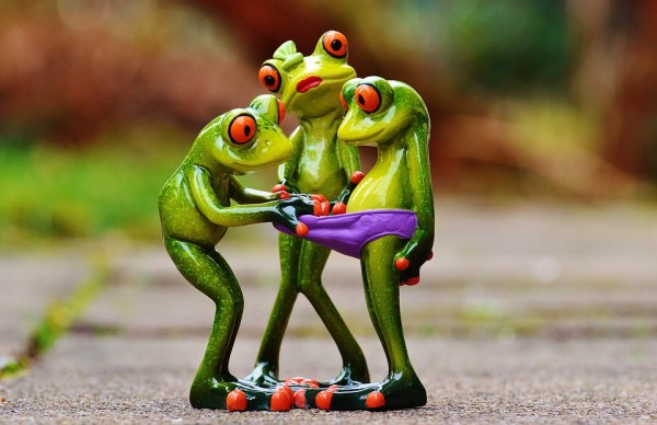 frogs-1200161_960_720