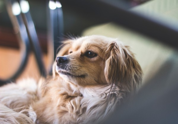 パブロフの犬とDeep Learningと赤ちゃんの意外な関係性。